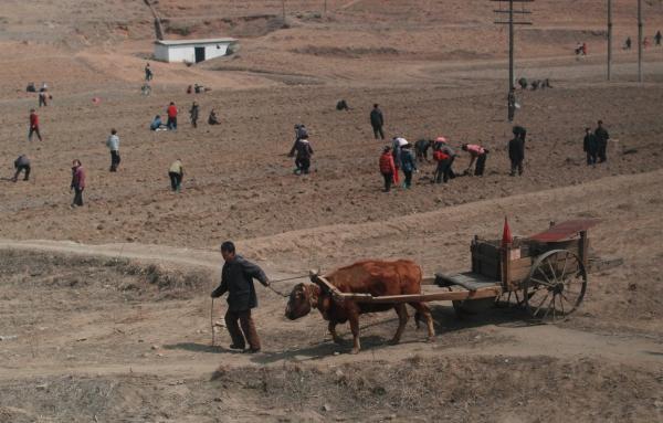 «Все способы спастись от голода были капиталистическими». История КНДР в очерках Андрея Ланькова, часть II
